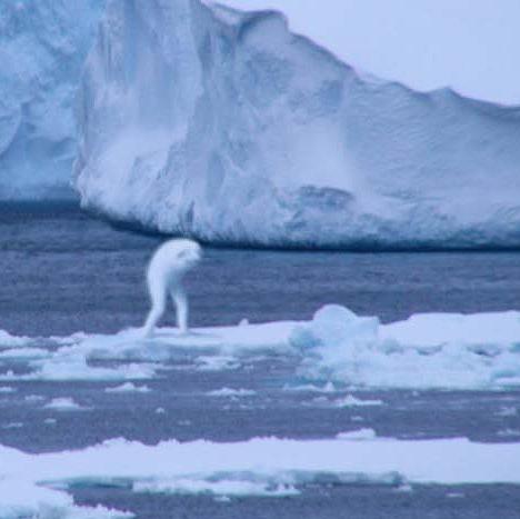 Фотографии «нинген» в Атлантическом океане и в Антарктиде